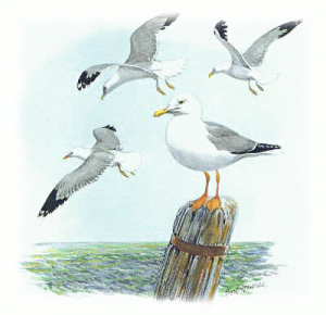 Herring gull clipart clipart free library Herring Gull Clipart | Clipart Panda - Free Clipart Images clipart free library