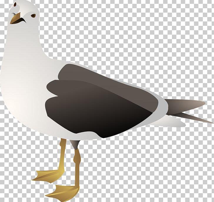 Herring gull clipart svg free Gulls European Herring Gull Bird PNG, Clipart, American Herring Gull ... svg free