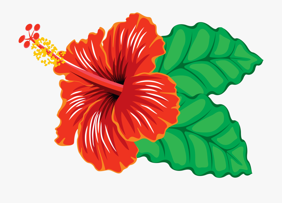 Hibiscus clipart images picture stock Hibiscus Flower Clipart - Hibiscus Clipart #1036 - Free Cliparts on ... picture stock