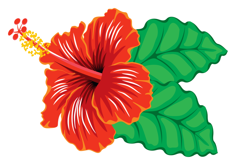 Hibiscus flower clipart clip art freeuse stock Hibiscus Clip Art & Hibiscus Clip Art Clip Art Images - ClipartALL.com clip art freeuse stock