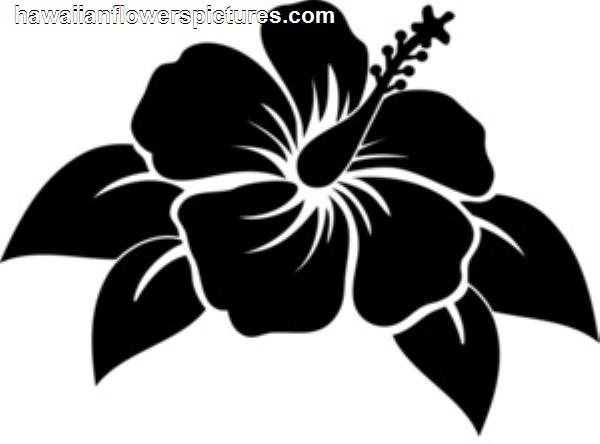 Hibiscus flower and paisley clipart black and white image download Hibiscus Flowers Are Common Hawaiian Flower Tattoo Design 600x444 ... image download