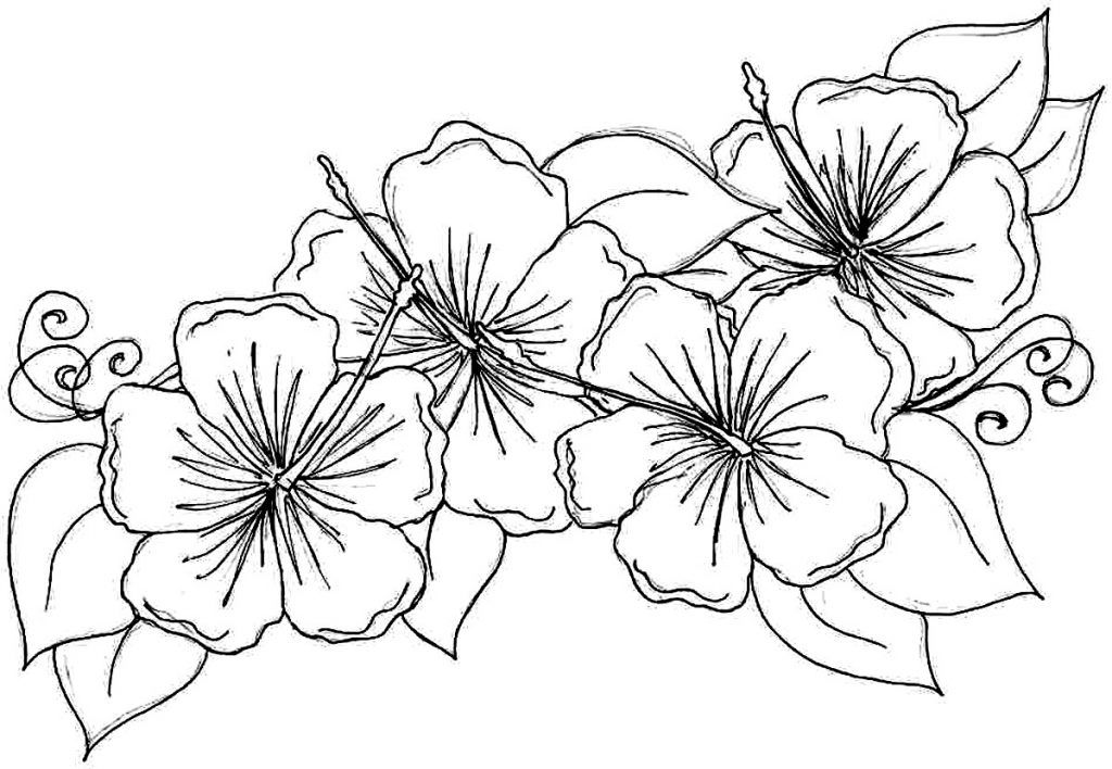 Hibiscus flower and paisley clipart black and white banner download Free Printable Hibiscus Coloring Pages For Kids | Coloring pages ... banner download
