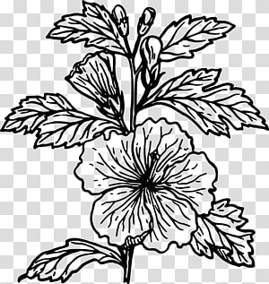 Hibiscus flower clipart black and white lineart jpg black and white download Black and white Drawing Line art , morning glory transparent ... jpg black and white download