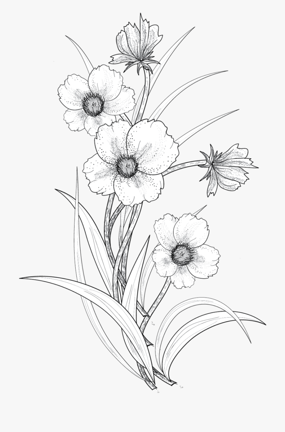 Hibiscus flower clipart black and white lineart picture black and white download Flowers Png By - Hibiscus Flower Line Art Png #680830 - Free ... picture black and white download