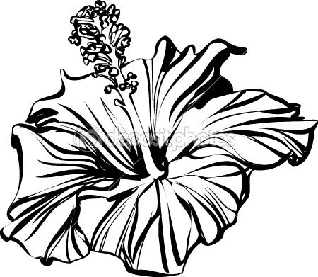 Hibiscus flower clipart black and white lineart png royalty free hibiscus outline | ART | Hibiscus drawing, Rose line art, Hibiscus png royalty free