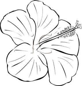 Hibiscus flower clipart black and white lineart svg free download Flower Black and White Clipart #34630 | Henna Tattoo Ideas in 2019 ... svg free download
