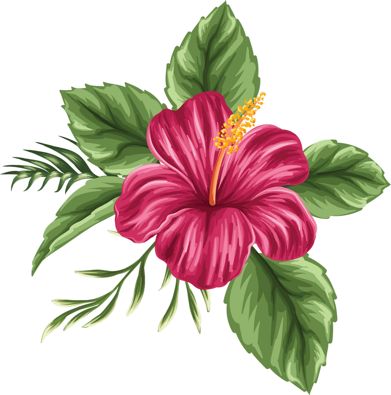 Hibiscus flower drawing clipart vector black and white stock Image du Blog zezete2.centerblog.net | Hibiscus | Pinterest | Blog ... vector black and white stock