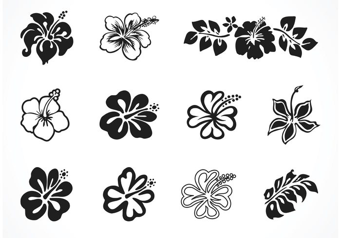 Hibiscus flowers vector art free graphic transparent download Free Vector Hibiscus Silhouettes - Download Free Vector Art, Stock ... graphic transparent download