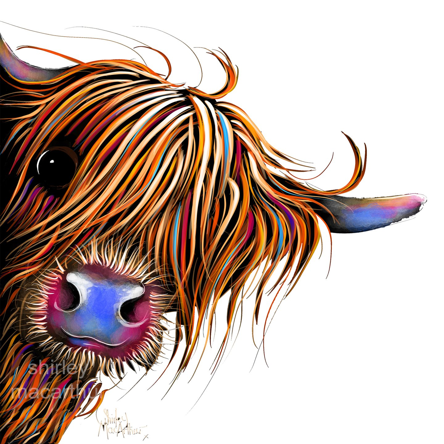 Highland cattle clipart png black and white \' SuGaR LuMP \' 30x30 iNCH HiGHLaND CoW PRiNT, WaLL ART - BY SHiRLeY  MacARTHuR png black and white
