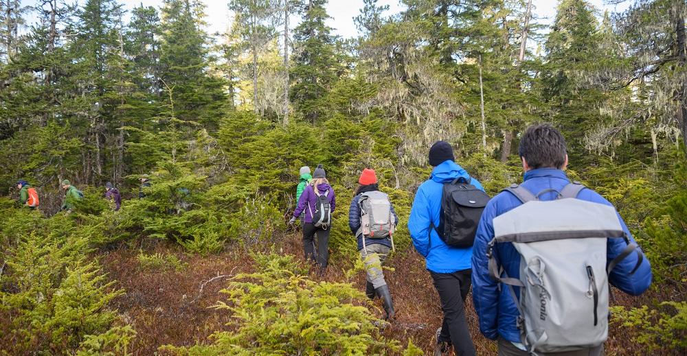 Hiking in the rainforest in alaska clipart image transparent stock Coastal Rainforest Margins Research Network | Alaska Coastal ... image transparent stock