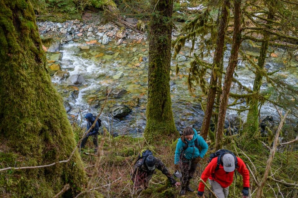 Hiking in the rainforest in alaska clipart clipart freeuse stock Coastal Rainforest Margins Research Network | Alaska Coastal ... clipart freeuse stock