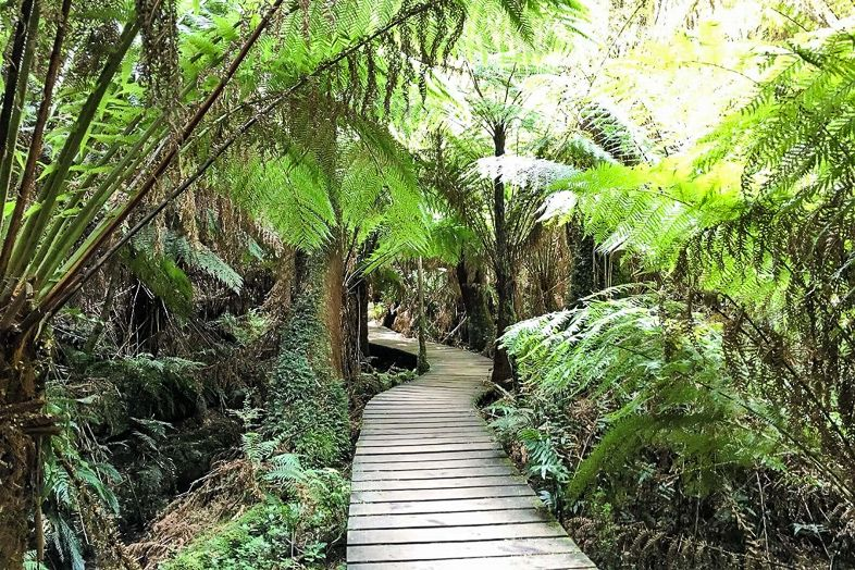 Hiking in the rainforest in alaska clipart jpg library The Best Hikes in New Zealand, Australia and Beyond ... jpg library