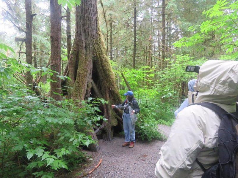 Hiking in the rainforest in alaska clipart graphic Rainforest Sanctuary, Totem Park & Eagles | Voyij graphic