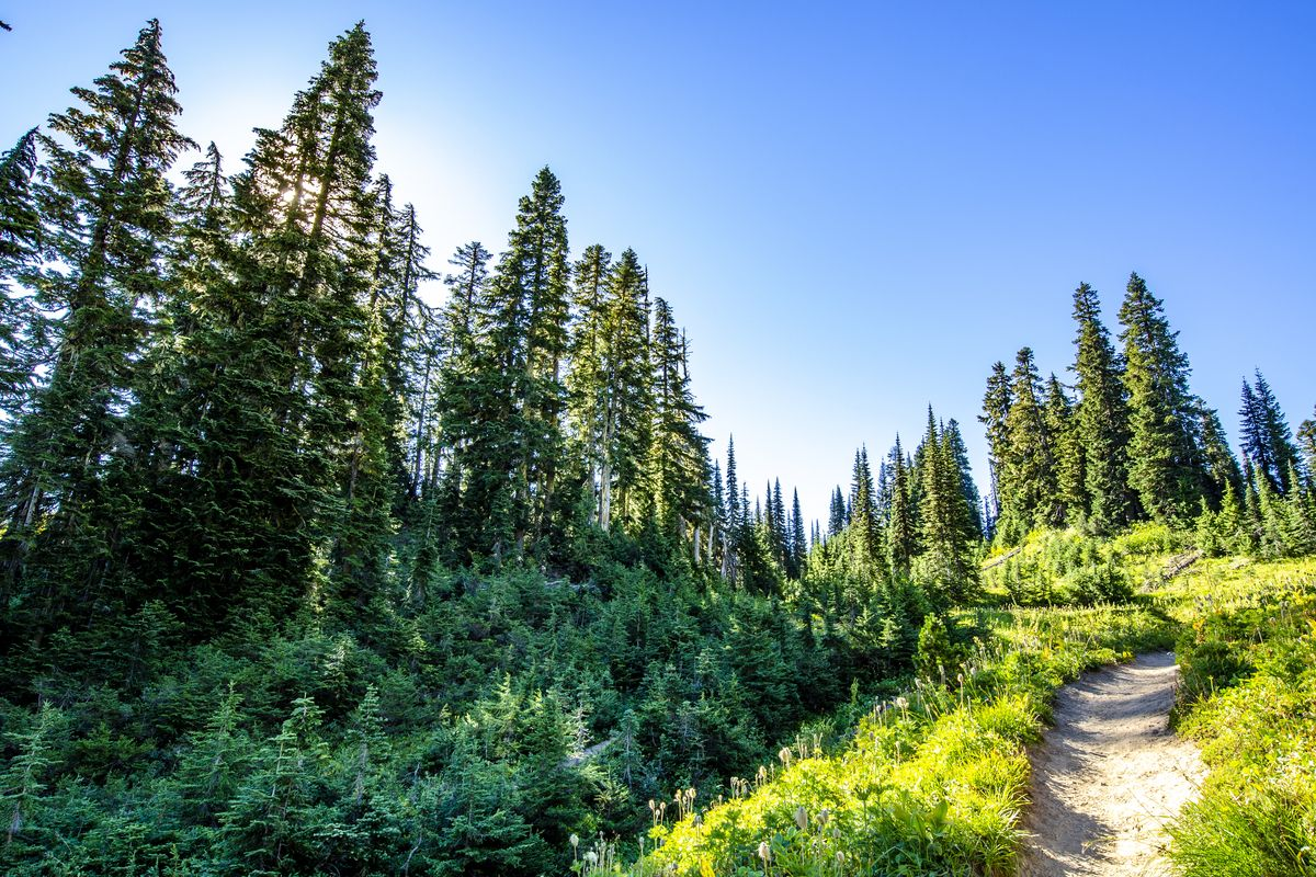 Hiking in the rainforest in alaska clipart clip free Seattle-area hiking trail maps for beginners and experienced ... clip free