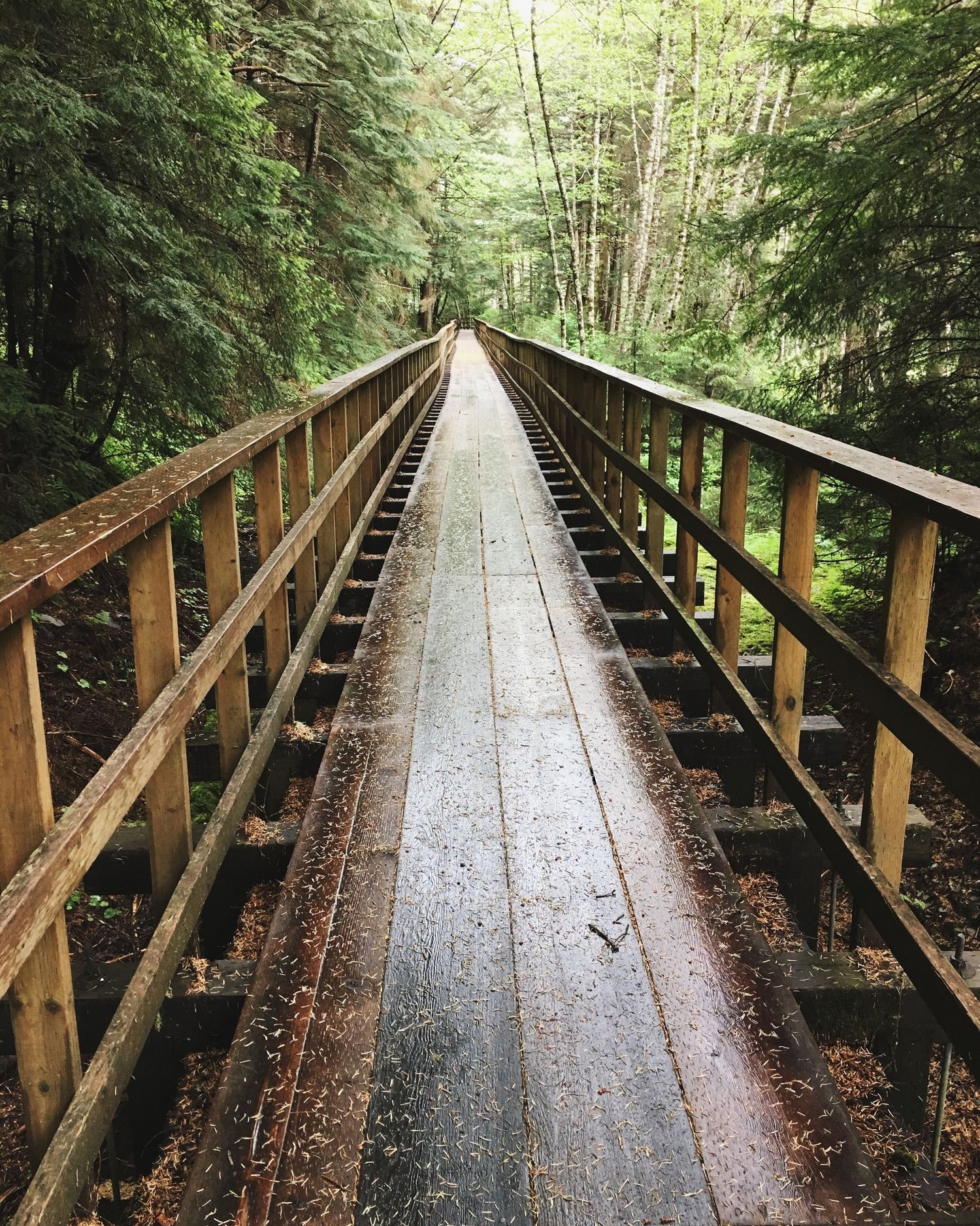 Hiking in the rainforest in alaska clipart picture library Places to Visit in Juneau, Alaska ↠ Gold Creek Flume Trail ... picture library
