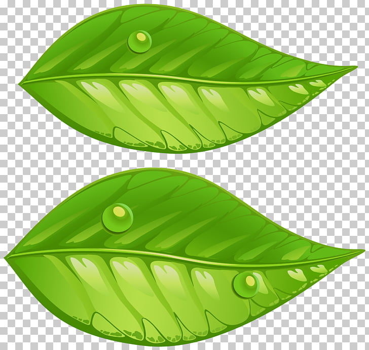 Hojas verdes clipart image free stock Dos hojas verdes, hojas verdes, hojas verdes. PNG Clipart ... image free stock