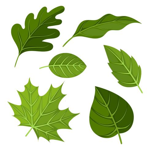 Hojas verdes clipart banner freeuse Vector de imágenes prediseñadas de hojas verdes - Descargar ... banner freeuse