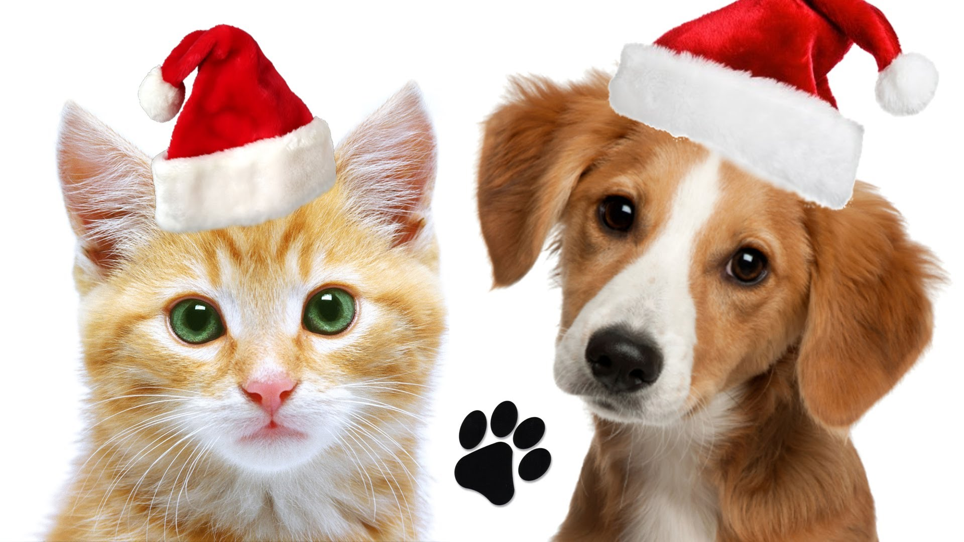 Holiday pet clipart clip art transparent Holiday Pet Safety Tips - Pet\'s First Animal Hospital clip art transparent