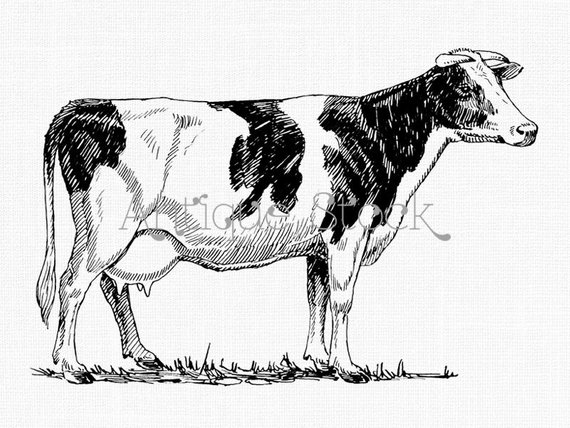 Holstein clipart png freeuse library Holstein Cow Clipart - Printable Graphics - PNG and JPG ... png freeuse library