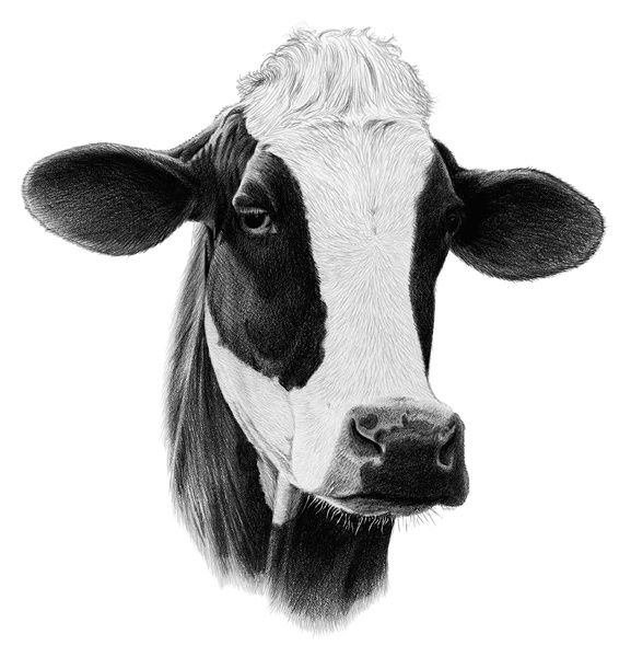Holstein clipart jpg library stock Dairy Cow Head Clip Art - Gallery | Baby Boy Room in 2019 ... jpg library stock