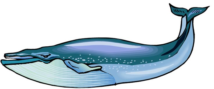 Homongous clipart graphic stock Whale clipart humongous for free download and use images in ... graphic stock