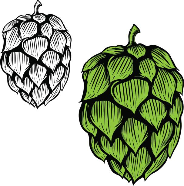 Hops beer clipart picture download Hops clipart - 82 transparent clip arts, images and pictures for ... picture download