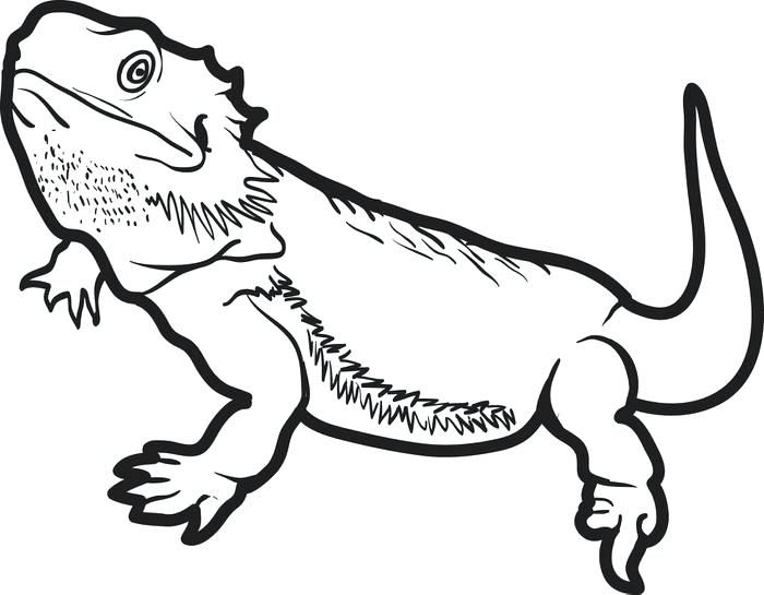 Horned lizard clipart clip download Horned Lizard Drawing at PaintingValley.com | Explore ... clip download