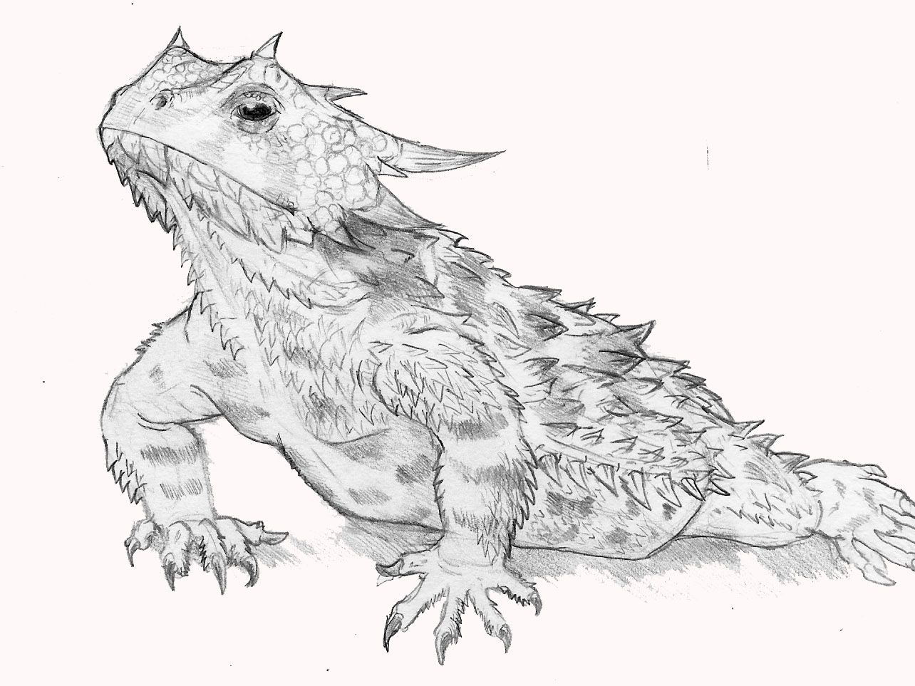 Horned lizard clipart png library stock Horned Lizard Clipart - Pencil And In Colo #91595 ... png library stock