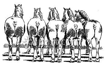 Horse butt clipart svg freeuse stock Clipart.com School Edition Demo svg freeuse stock