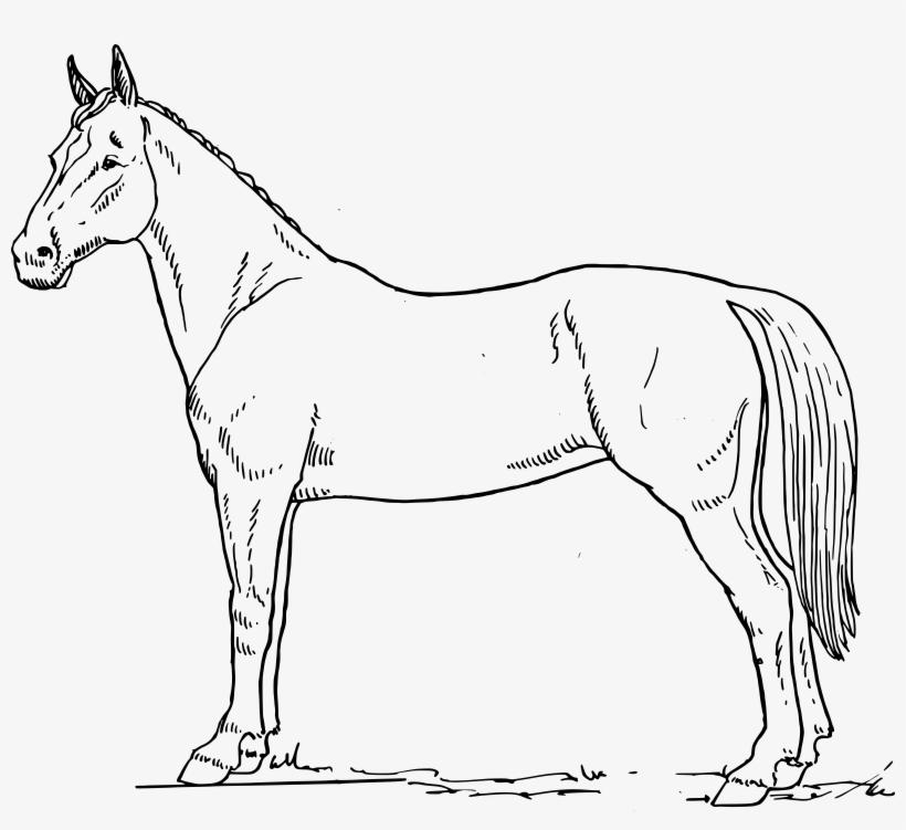 Horse drawing clipart graphic transparent Line Clipart Horse - Horse Drawing Black And White ... graphic transparent