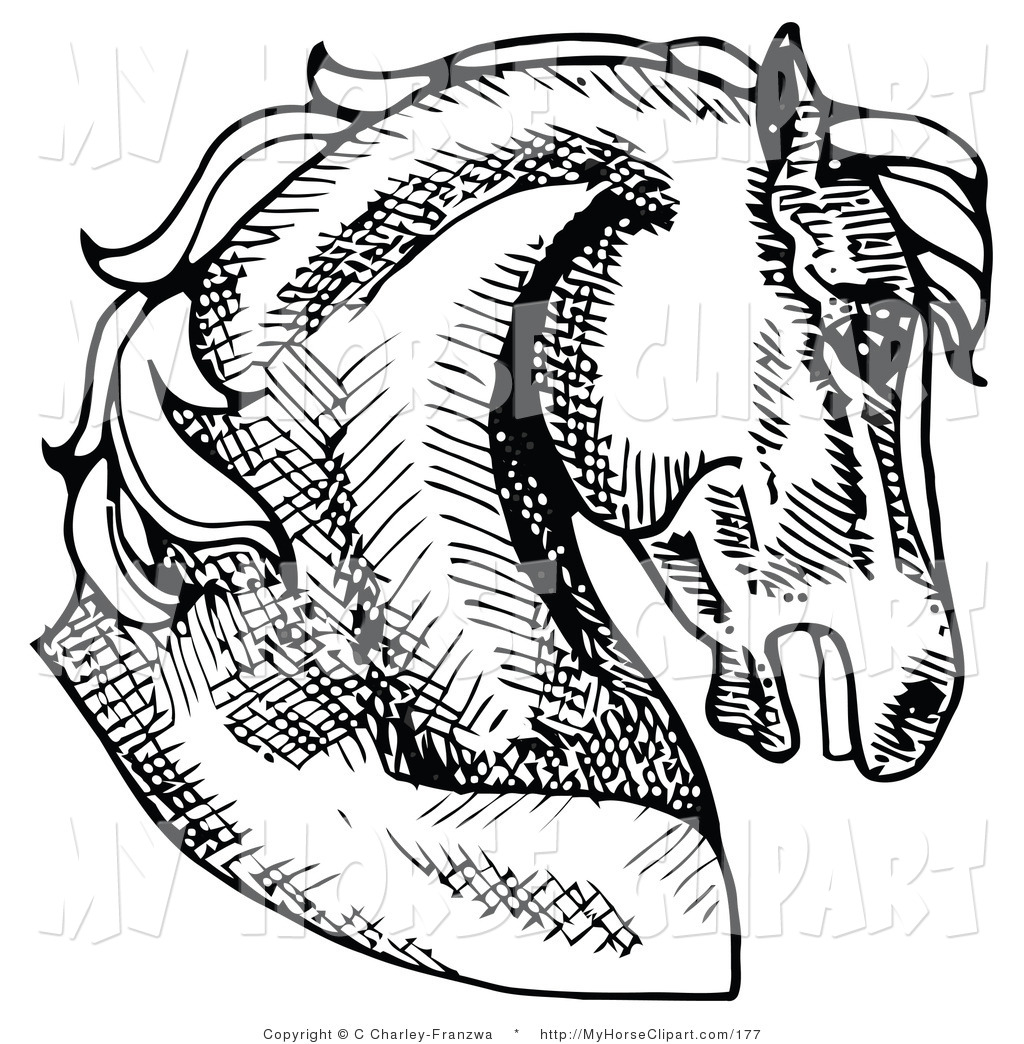 Horse head profile clipart clip art royalty free Clip Art of a Muscular Horse\'s Head and Neck in Profile ... clip art royalty free