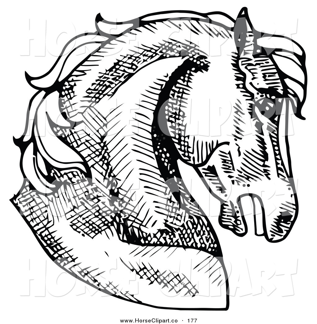 Horse head profile clipart banner freeuse Clip Art of a Muscular Horse\'s Head in Profile, Facing Right ... banner freeuse