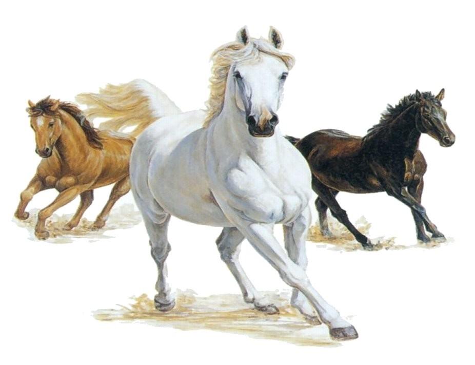 Horses clipart images png transparent stock Horses Clipart | gomediaction.net png transparent stock