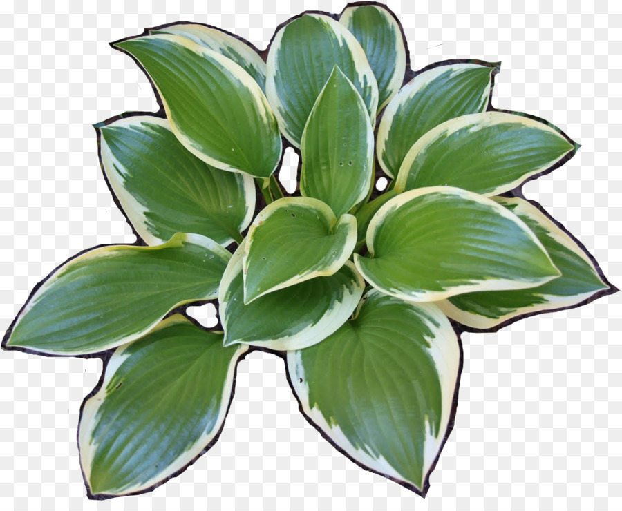 Hosta clipart vector library download Flower Garden png download - 1191*960 - Free Transparent ... vector library download