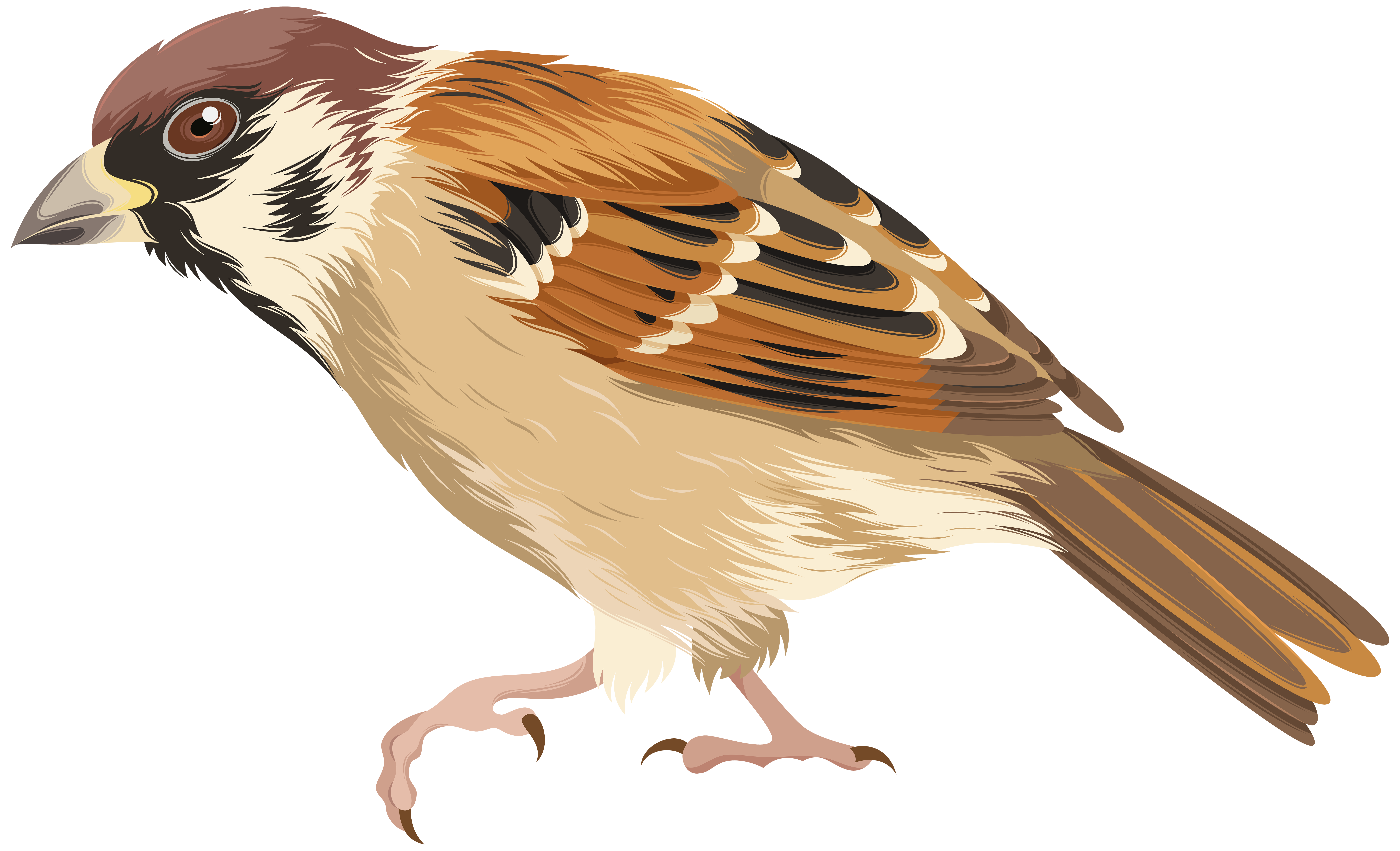 House sparrow clipart clip library stock Sparrow PNG Clip Art Image | Gallery Yopriceville - High-Quality ... clip library stock