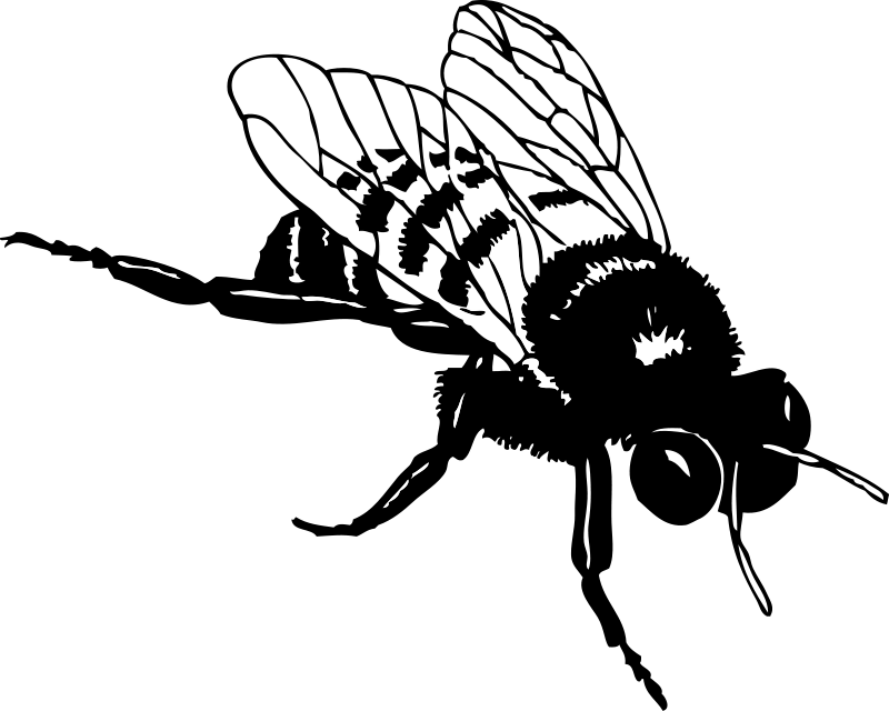 House fly clipart black and white clipart transparent library Bee | Free Stock Photo | Illustration of a bee | # 14212 clipart transparent library