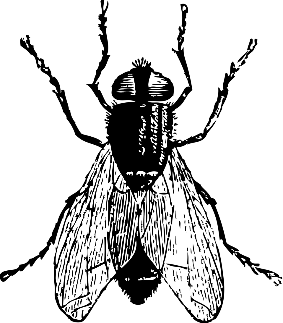 House fly clipart black and white black and white Fly | Free Stock Photo | Illustration of a fly | # 10806 black and white