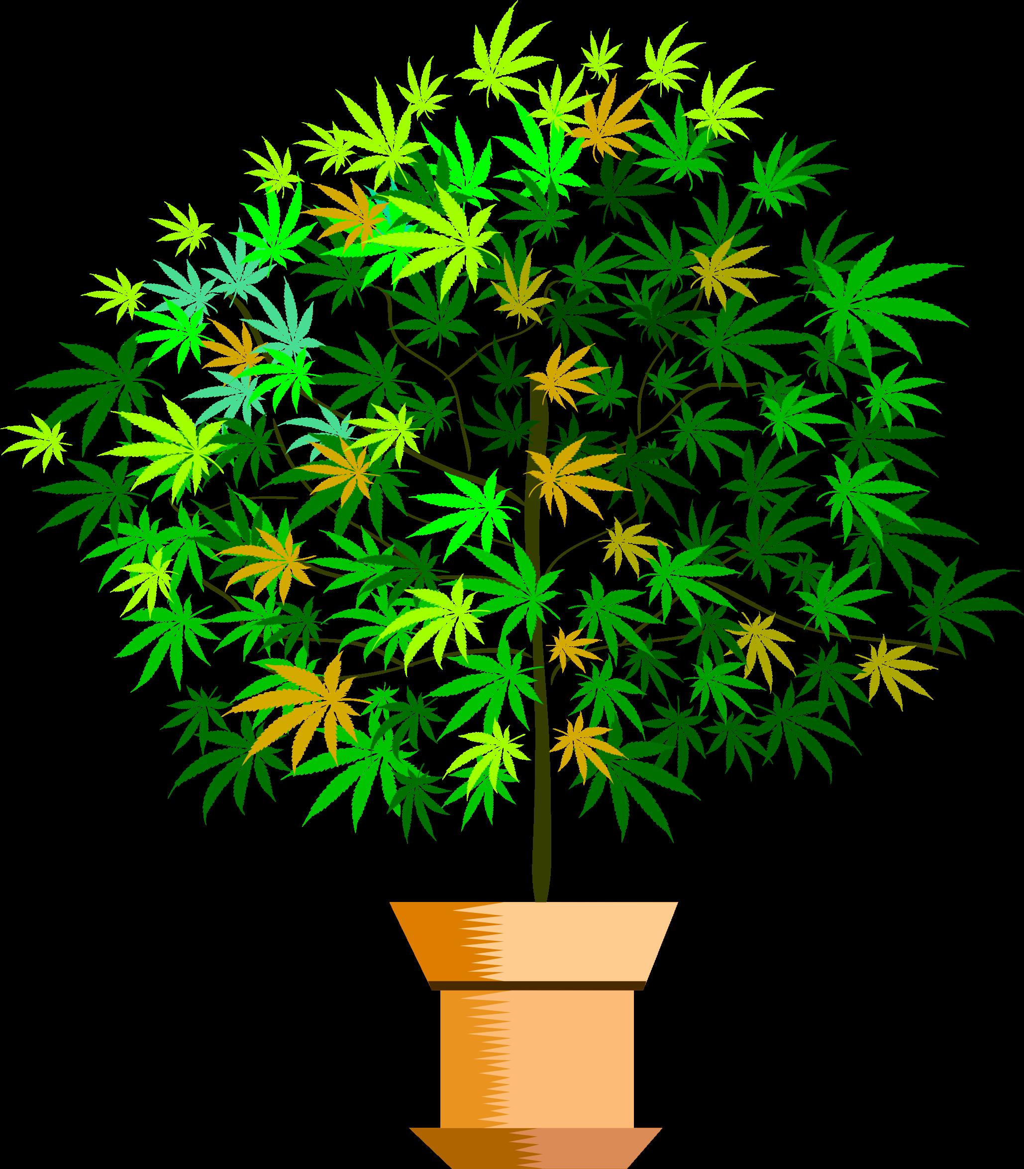 House plant clipart picture transparent download Clipart - a potted plant picture transparent download