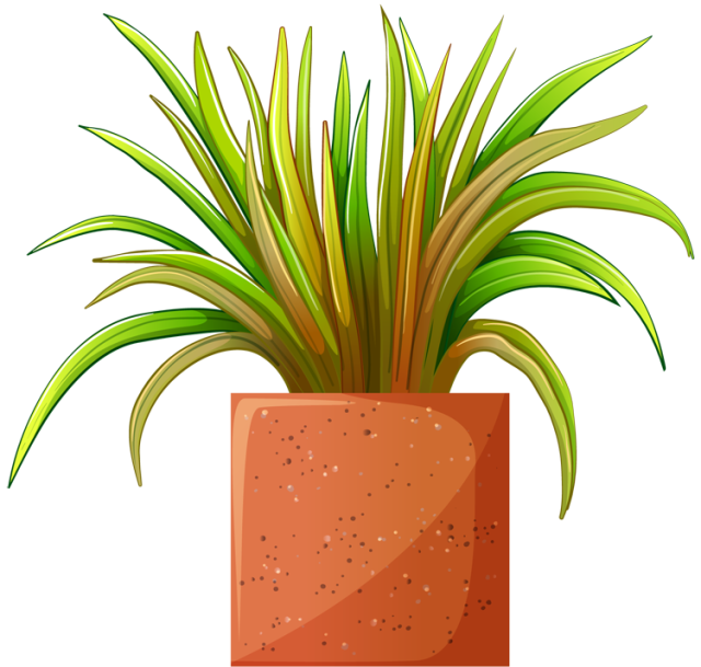 Clip Art of beautiful plants for the spring garden: Plant # 3 ... clip art transparent