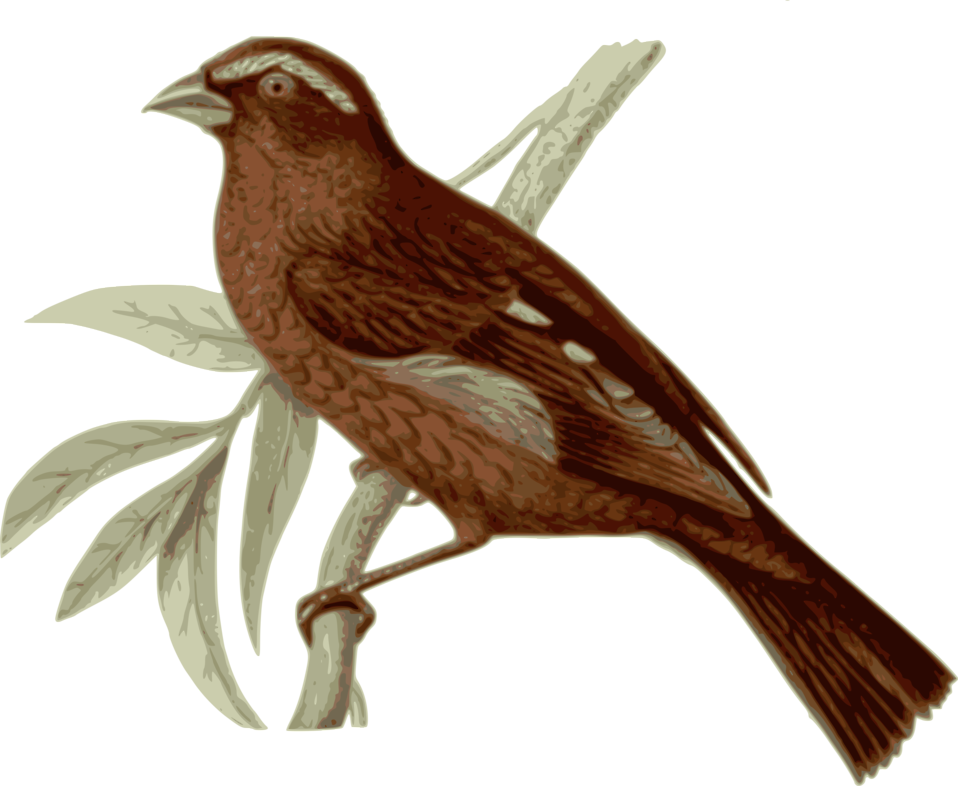 House sparrow clipart image freeuse library Bird | Free Stock Photo | Illustration of a bird perched on a branch ... image freeuse library