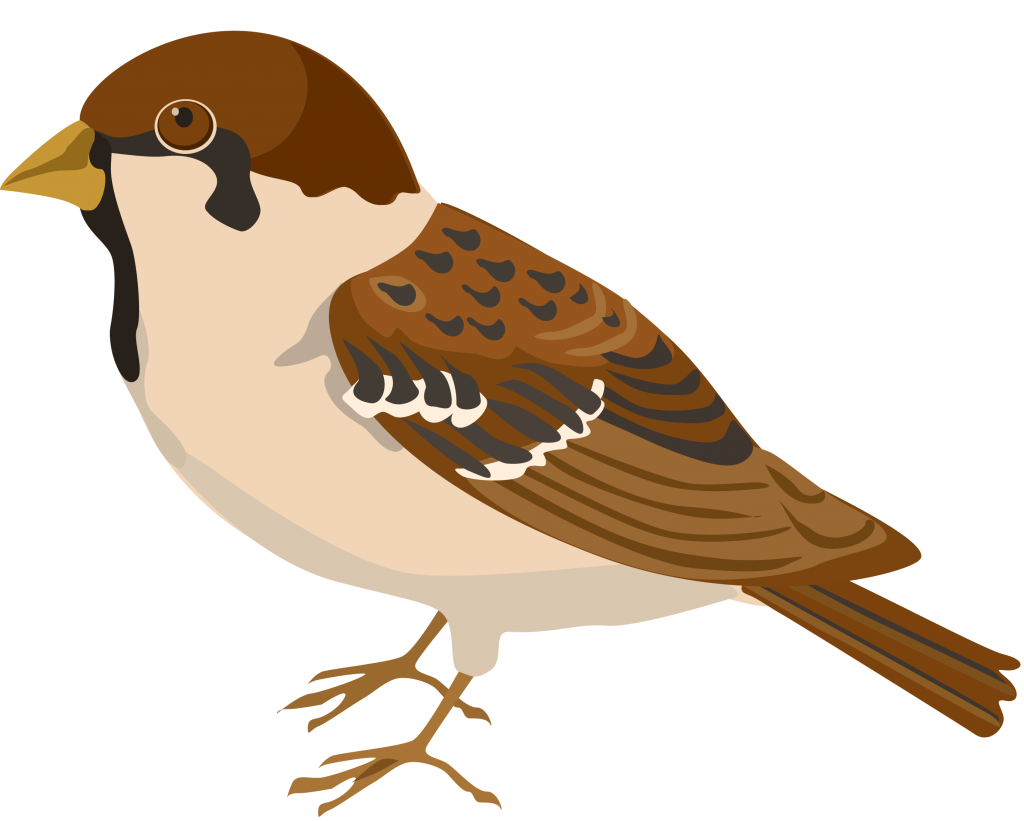 House sparrow clipart vector royalty free download Sparrow PNG Clipart - peoplepng.com vector royalty free download