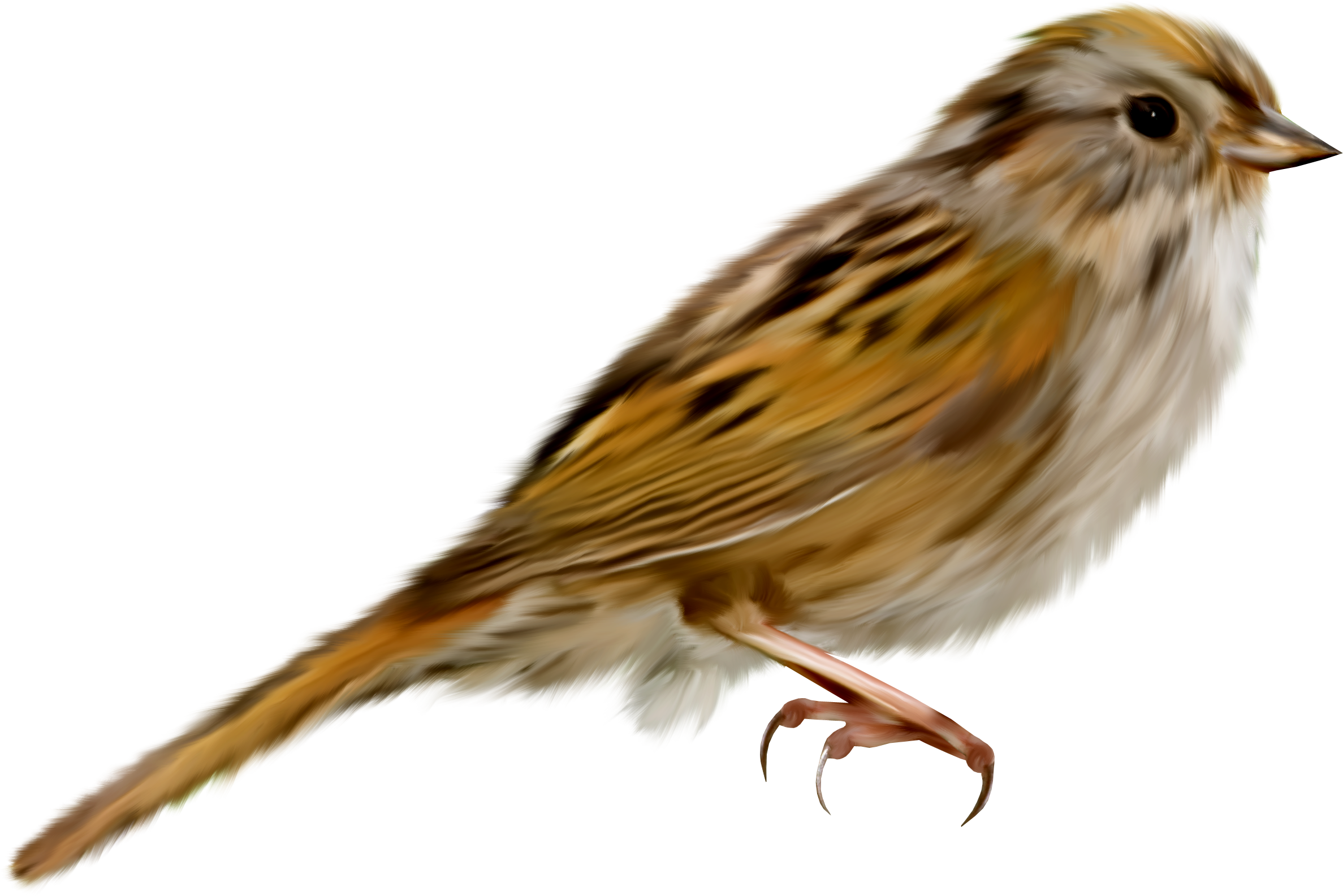 House sparrow clipart png free Sparrow PNG images free download png free