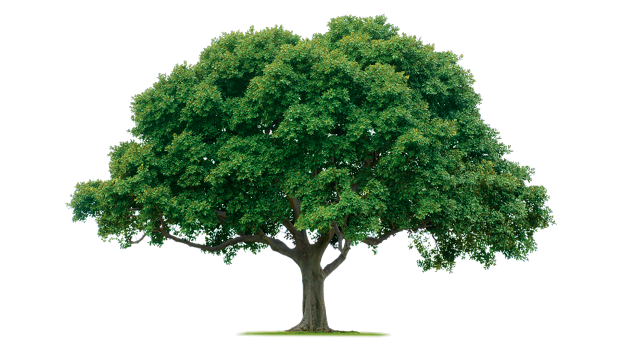 House tree clipart clip art library download Home Tree | Free Images at Clker.com - vector clip art online ... clip art library download