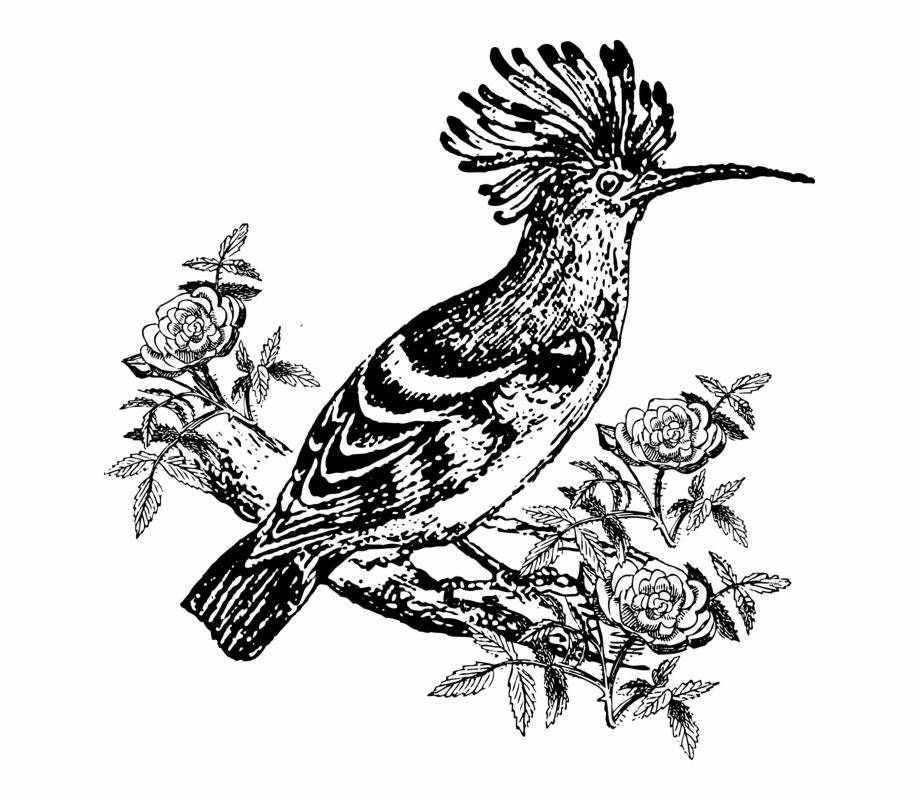 Hud clipart png freeuse Hoopoe, Bird, Animal, Exotic - Hud Hud Bird Clipart Free PNG ... png freeuse