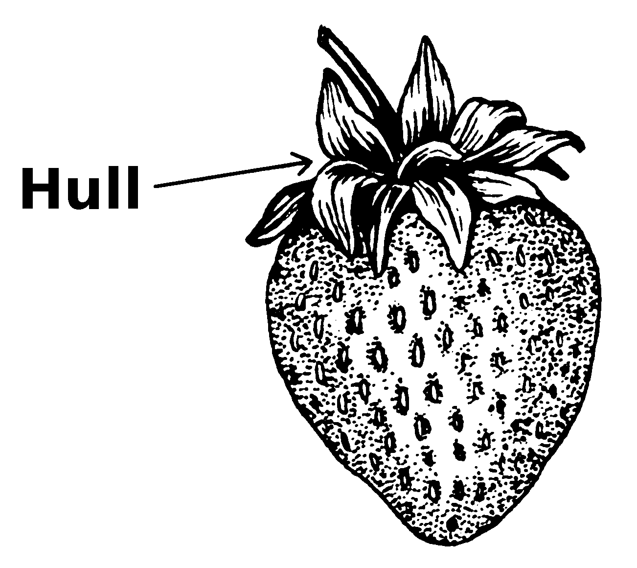 Hull clipart clip art black and white download File:Hull (PSF).png - Wikimedia Commons clip art black and white download