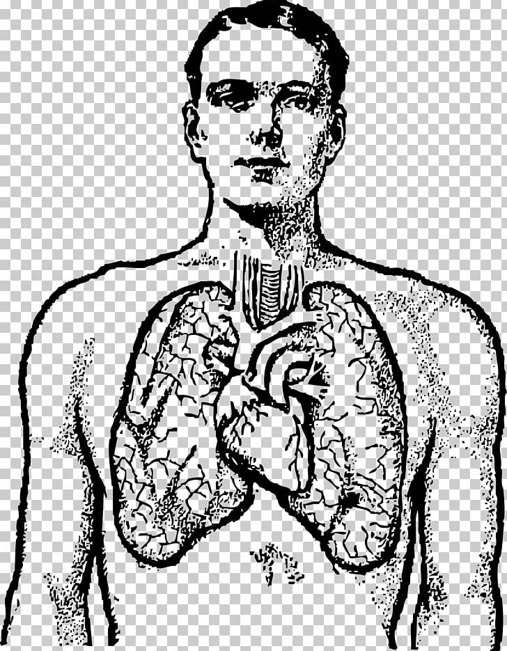 Human body small black and white clipart clip art transparent library Lung Human Body Heart PNG, Clipart, Anatomy, Arm, Art, Black And ... clip art transparent library