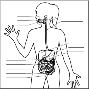 Human digestive system clipart black and white svg library Clip Art: Human Anatomy: Digestive System B&W Unlabeled I abcteach ... svg library