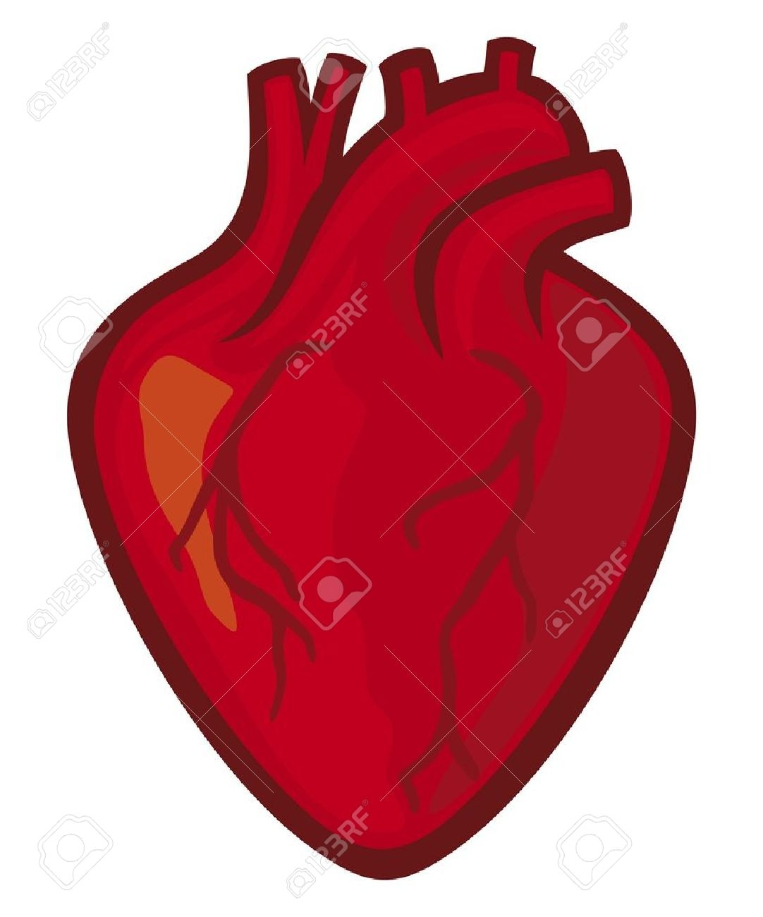 Human heart cliparts library Human Heart Clipart | Free download best Human Heart Clipart on ... library