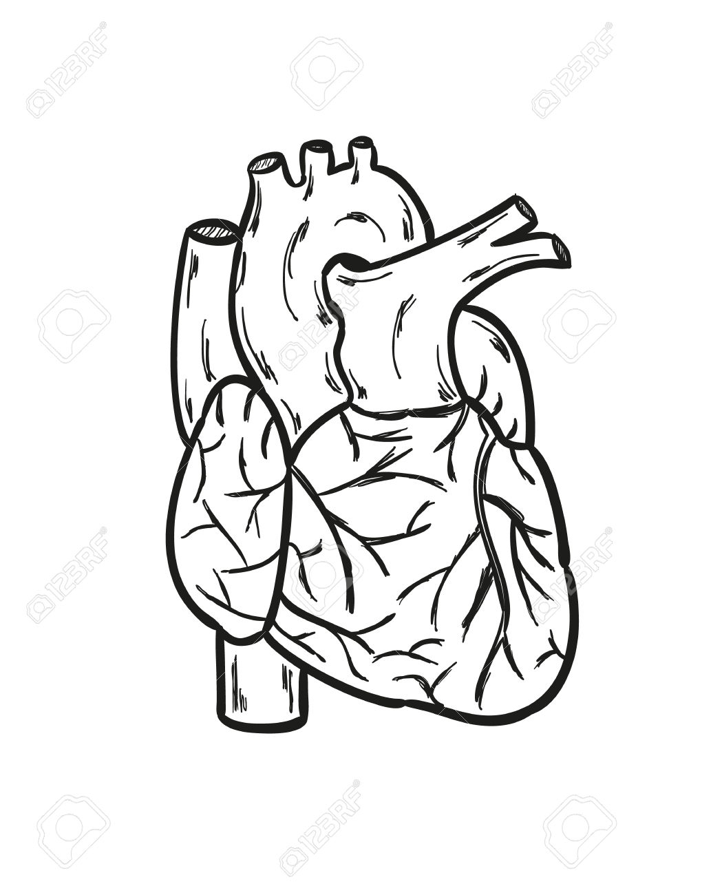 Human heart cliparts banner black and white Human Heart Black And White With Lables Human Heart Clip Art Black ... banner black and white
