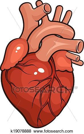 Human heart cliparts svg library stock Human Heart Clipart 6 - 294 X 470 - Making-The-Web.com svg library stock